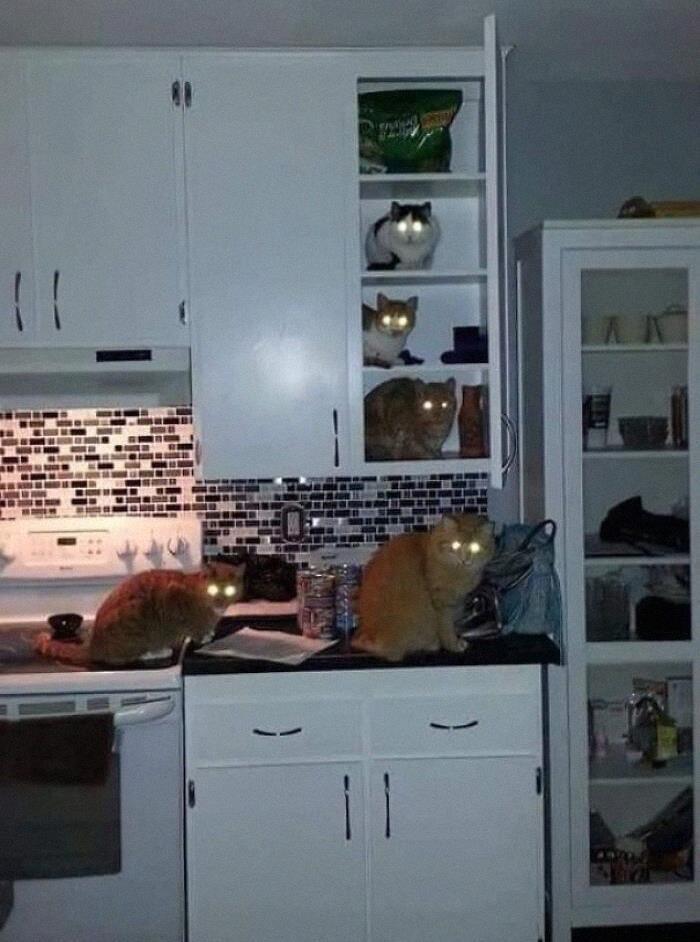 Коти повністю окупували кухню