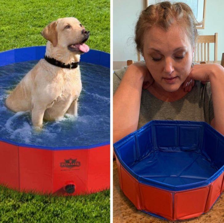 Вот как выглядит бассейн для игрушечных собак.