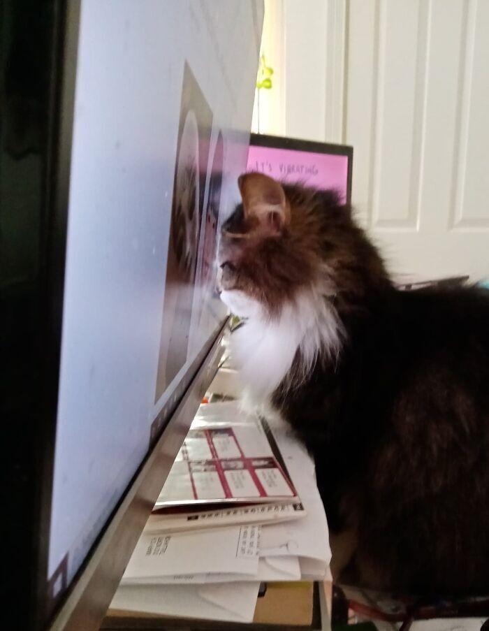 Кіт втомився від дистанційного спілкування