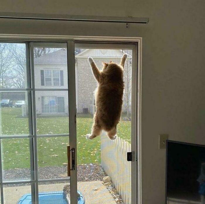 Кіт пригнув на вікно