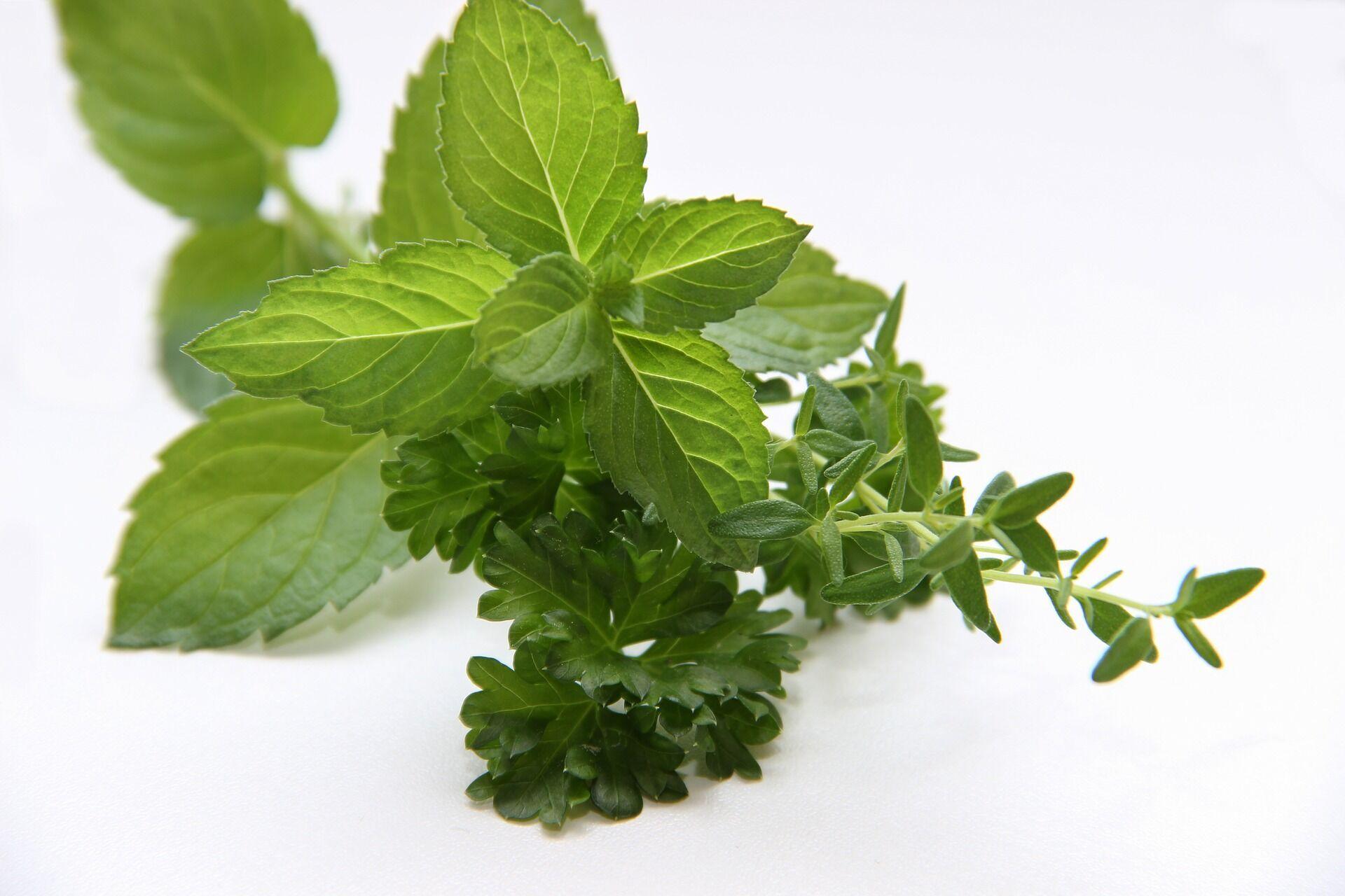 Зелень додасть супам пряного аромату