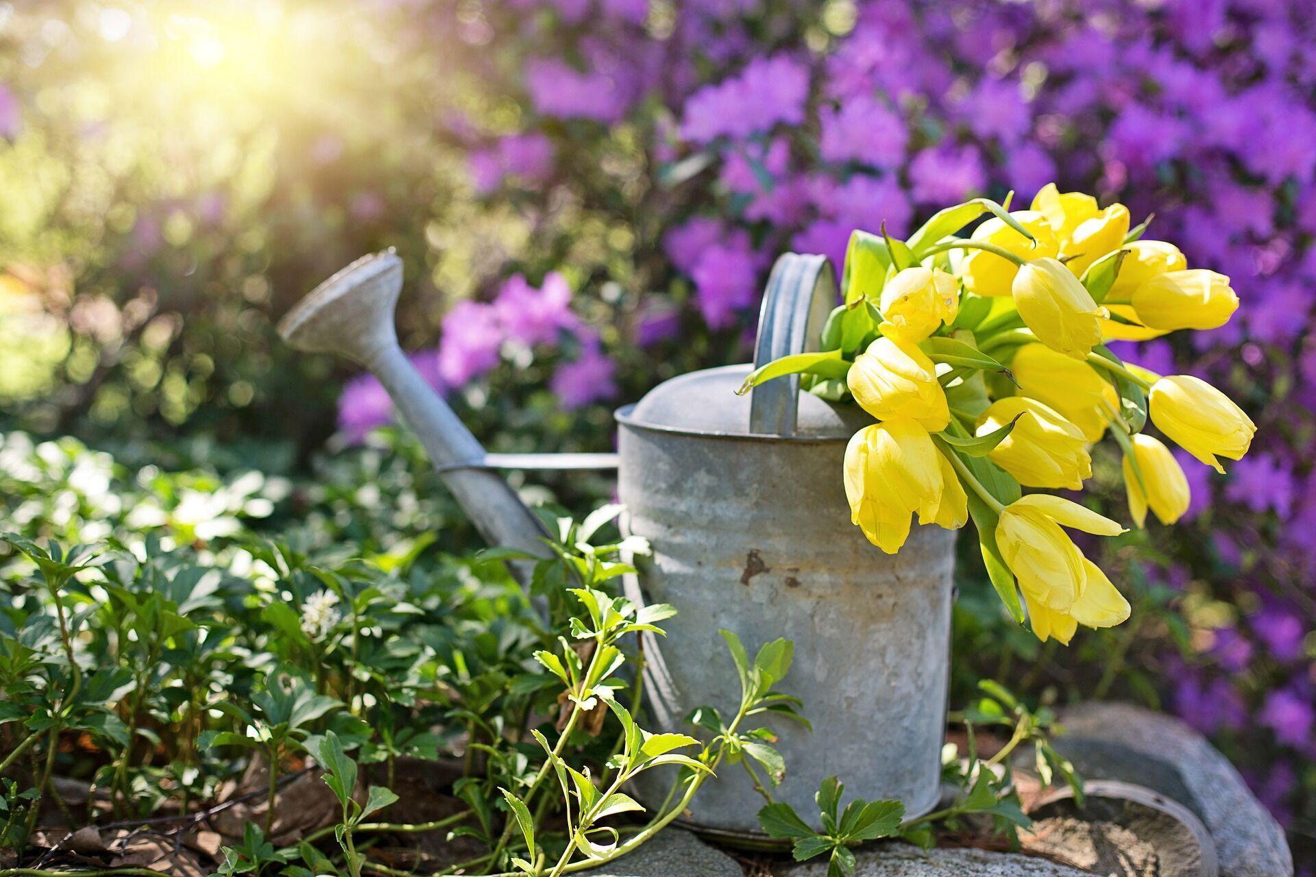 Лунный посевной календарь на июнь 2021 года поможет распланировать работы в саду и огороде