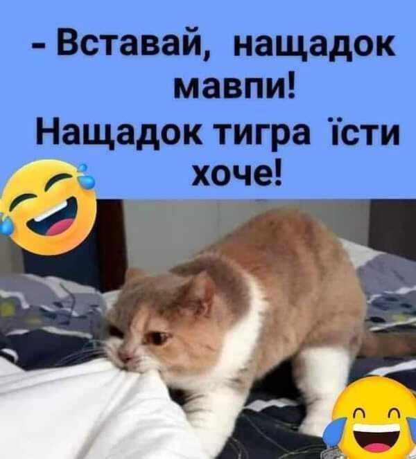 Мем про котів