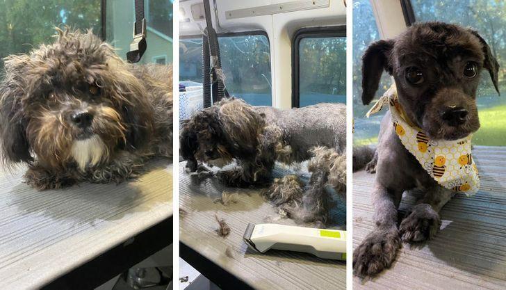 Дворовий пес змінив зачіску