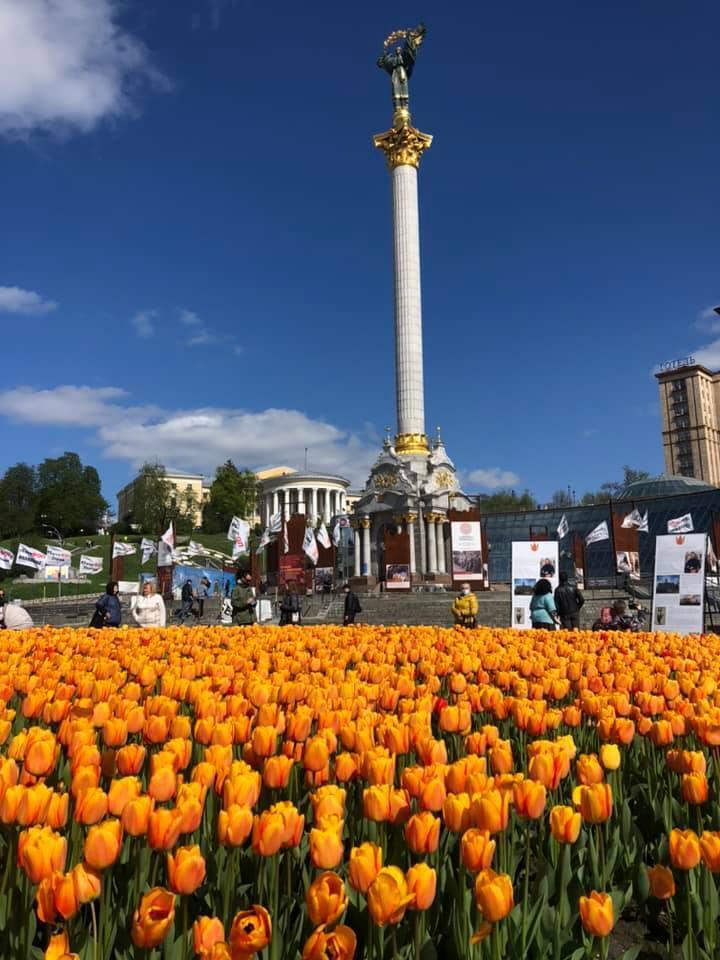 Тюльпани висадили за сприяння консульства Нідерландів