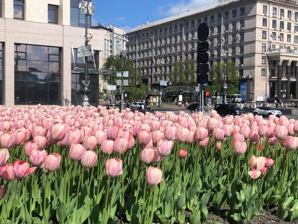 Помилуватися квітами можна на Михайлівській площі та Майдані Незалежності