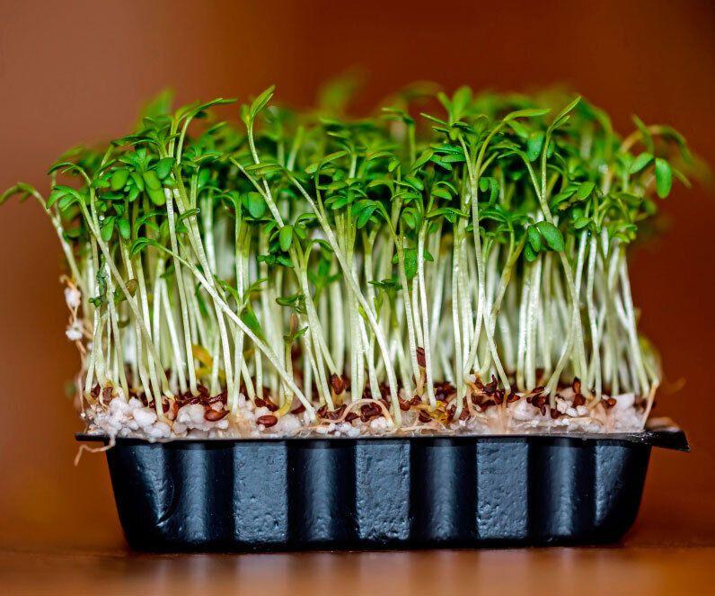 Крес-салат є джерелом фолієвої кислоти