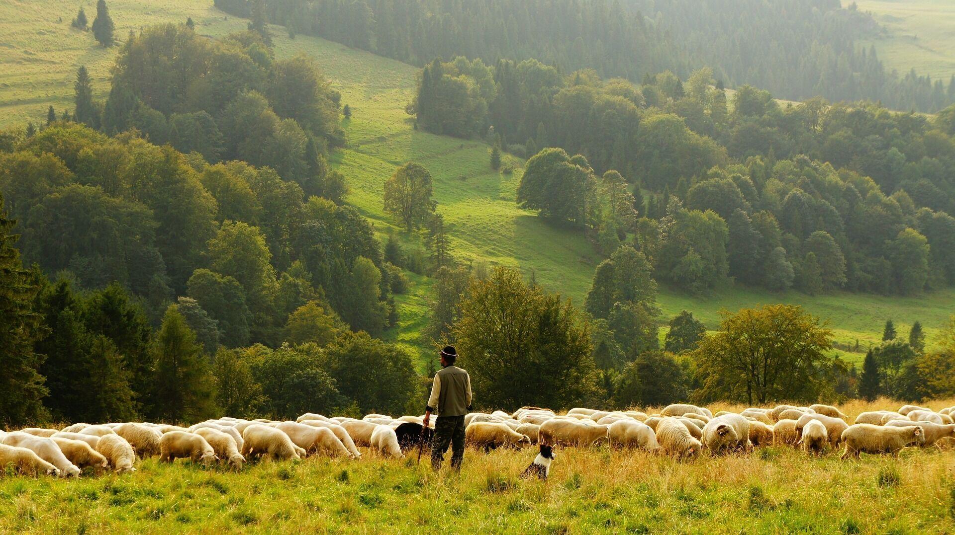 Главным обрядом 6 мая был выгон скота на Юрьеву росу
