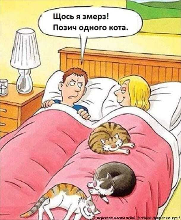 Прикол про котів