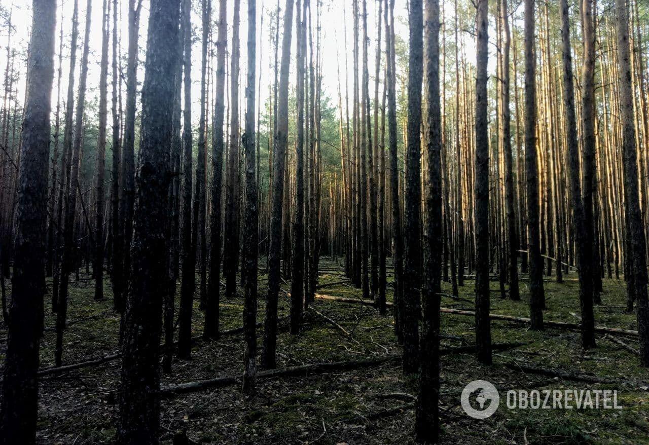 Густий і не раз горілий ліс