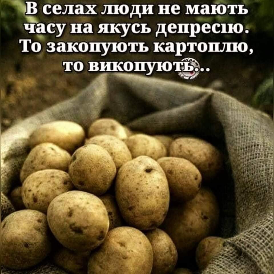 Мем про картоплю