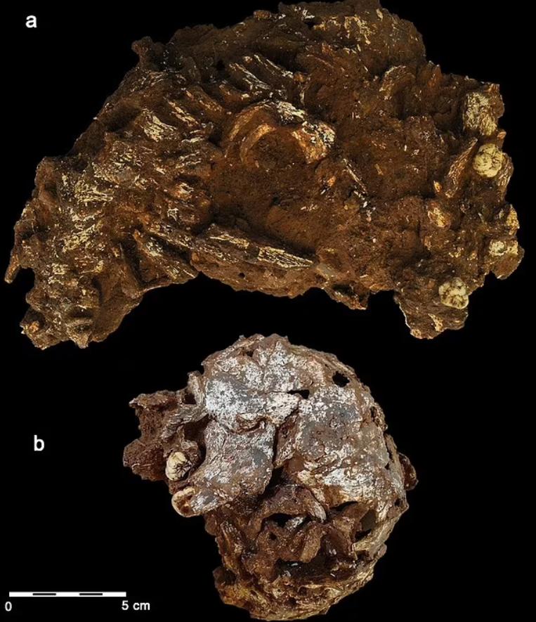 Кістки померлої дитини в Африці