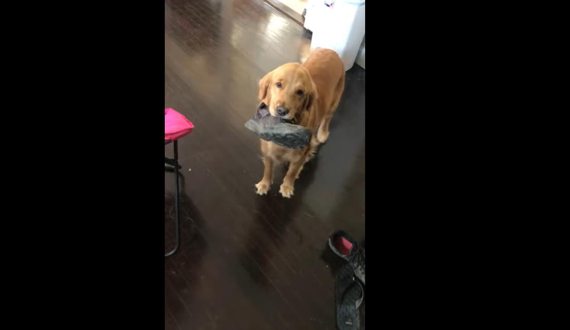 Собака видавав скигляві звуки, побачивши господаря