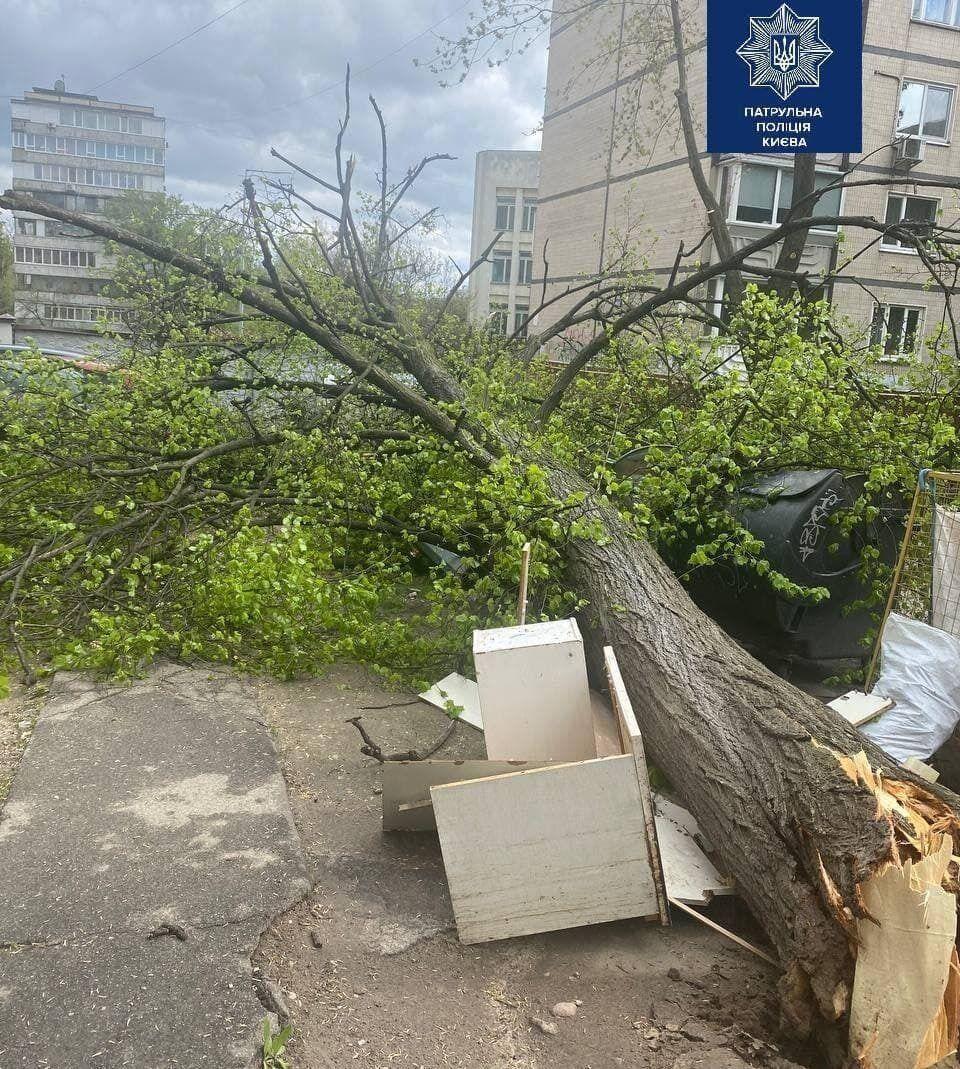 Дерево впало на вулиці Боткіна, 3