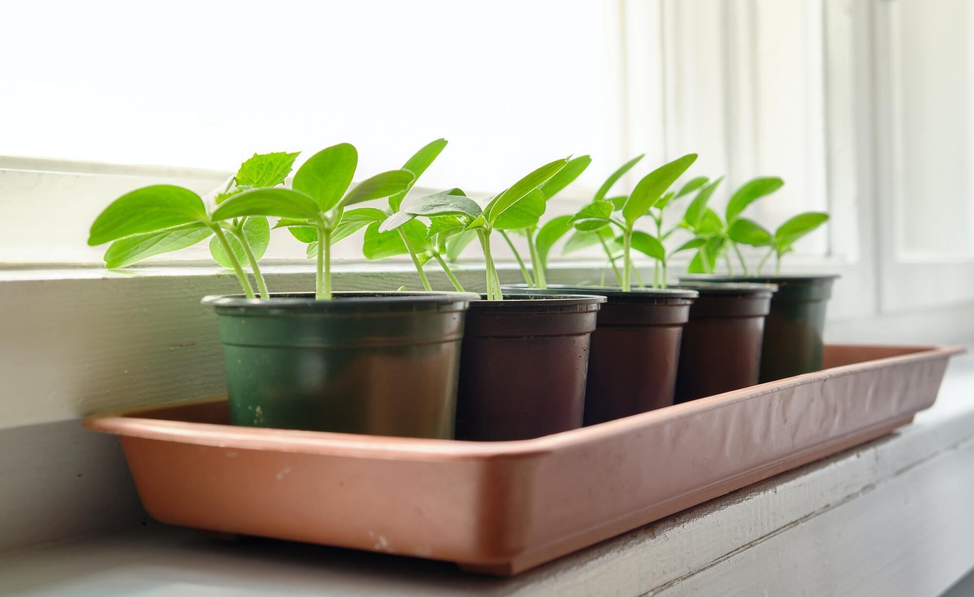 2 июня люди обычно занимаются высаживанием овощей