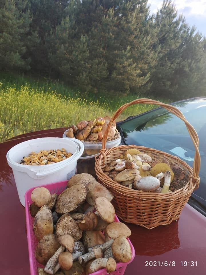 На початку цього літа люди почали збирати цілі кошики грибів.