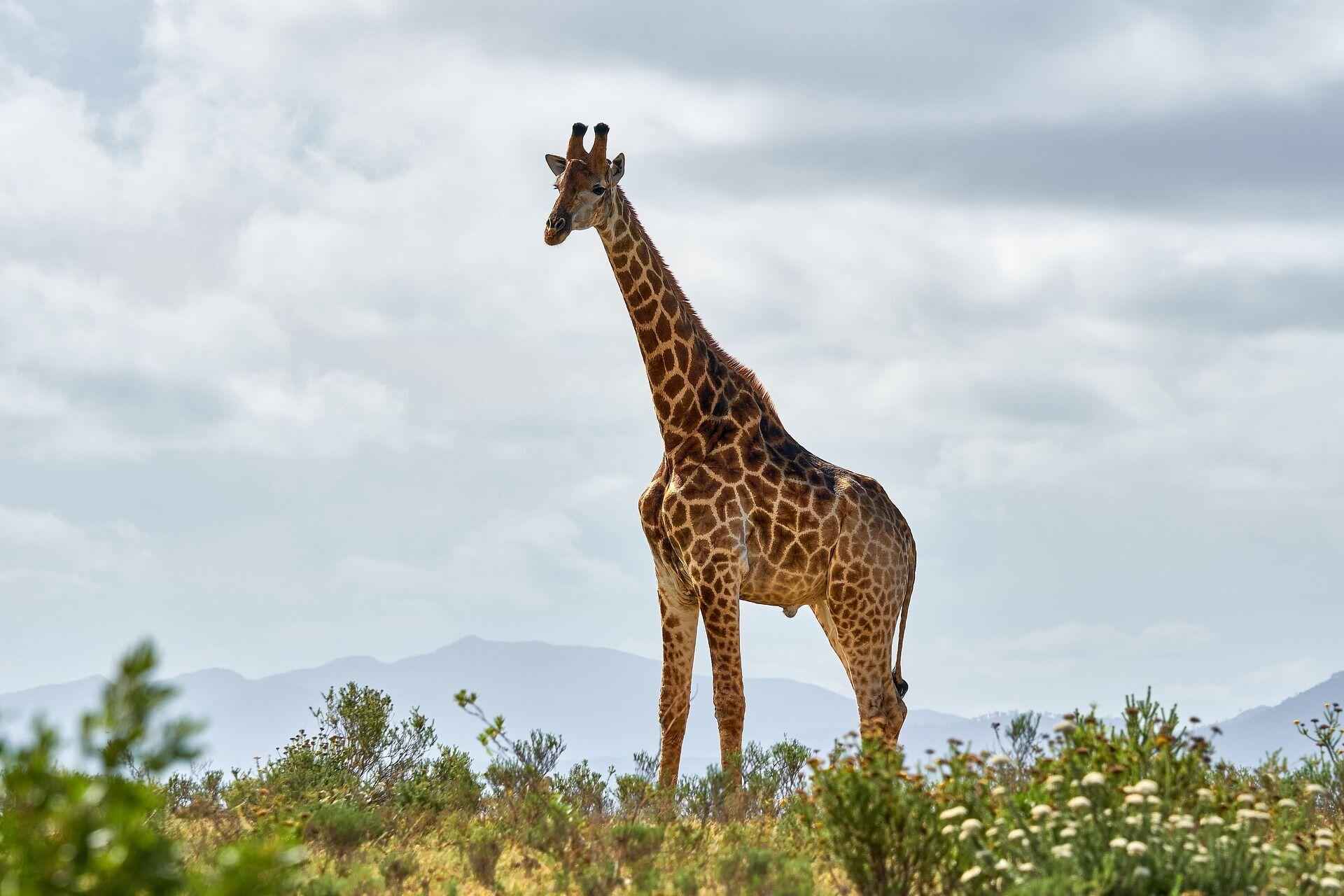 На берегах Паратетиса появились жирафы, слоны и многие другие виды животных