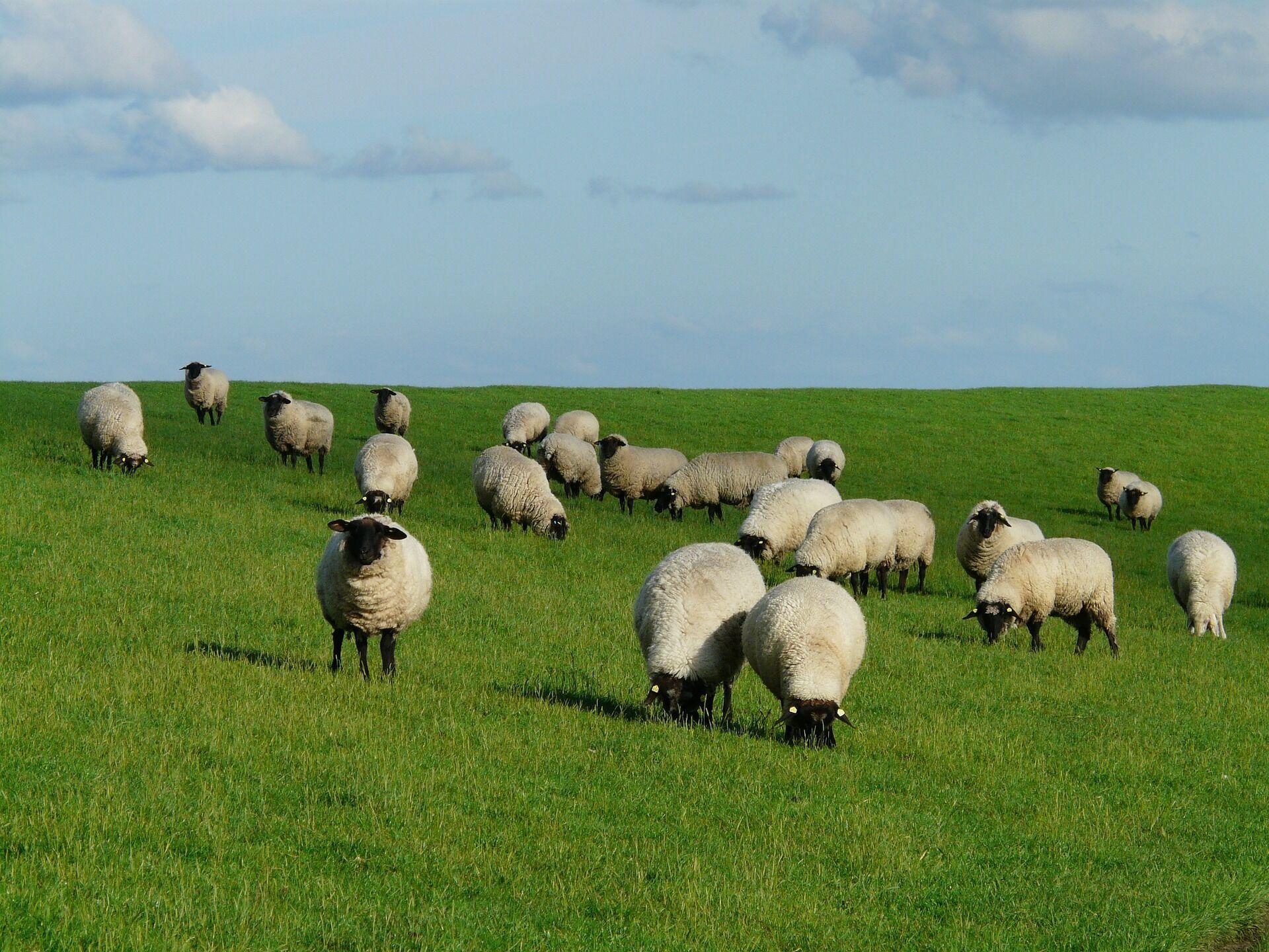 К северу от Паратетиса обитали предки нынешних коз и овец