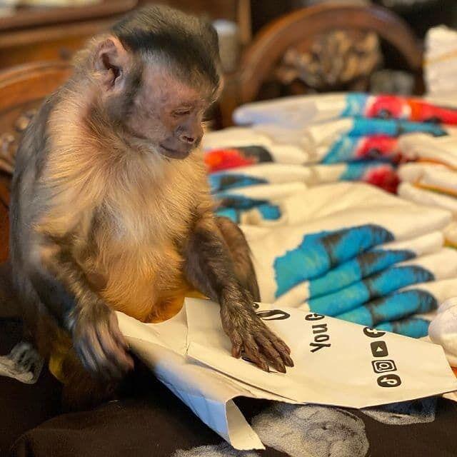 Популярная обезьяна в сети умерла