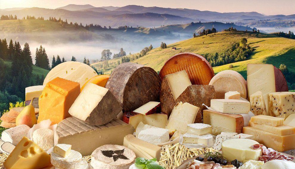Карпатские сыроварни изготовляют сыр по специальной швейцарской технологии