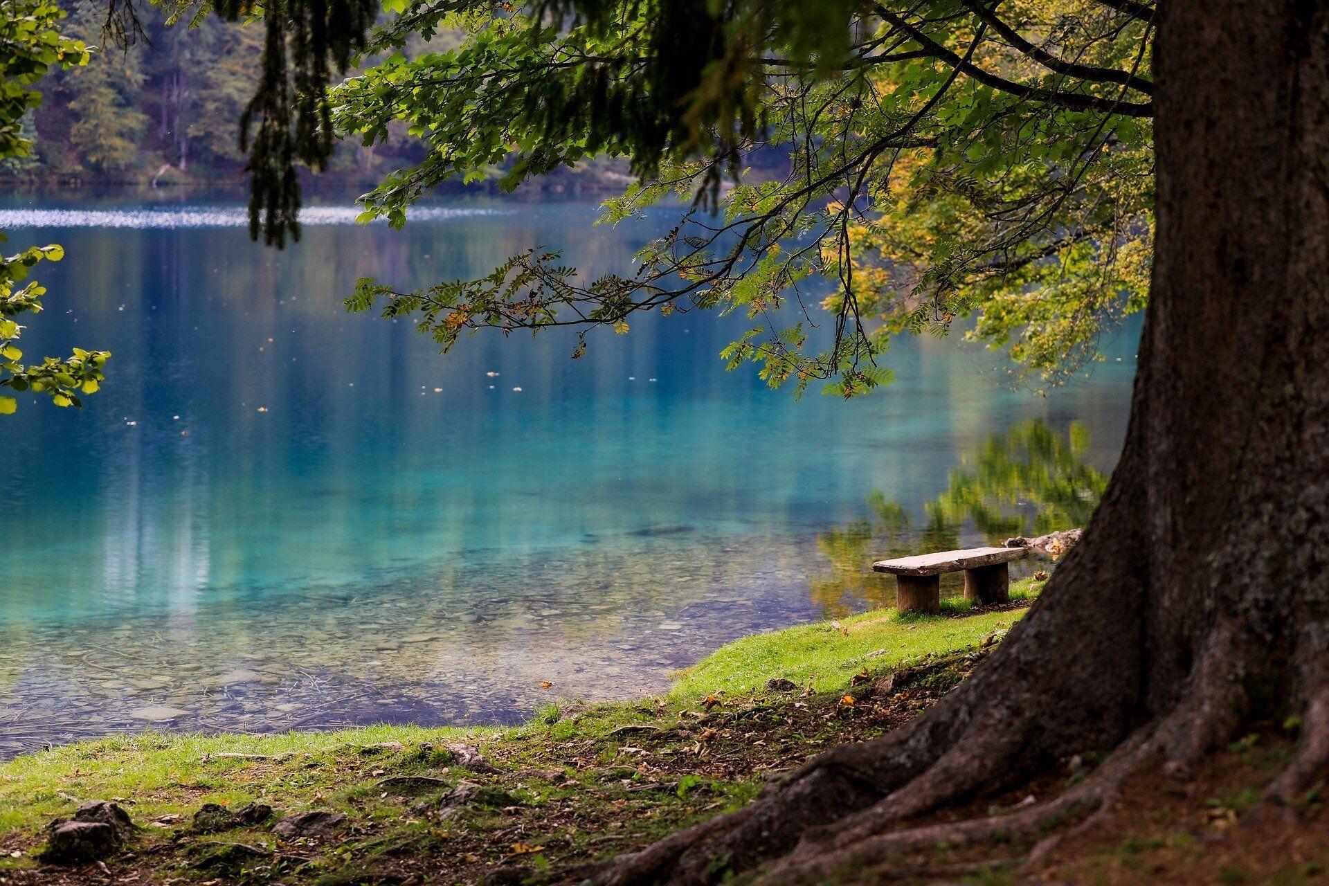 12 червня не варто ходити в ліс і гуляти по траві