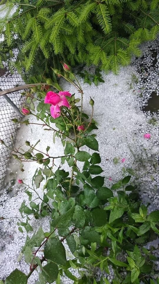 Град побил машины и цветы на клумбах