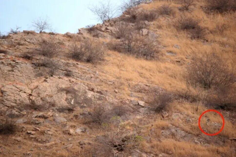 Фотографу з Індії вдалося сфотографувати леопарда.