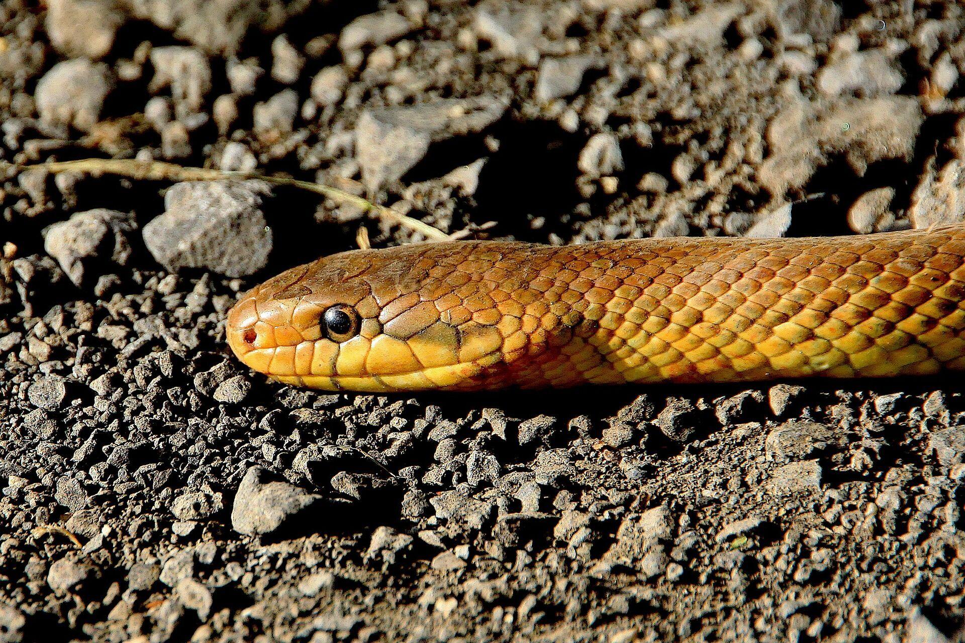"""12 червня змії виповзають зі своїх нір на """"зміїне весілля"""""""