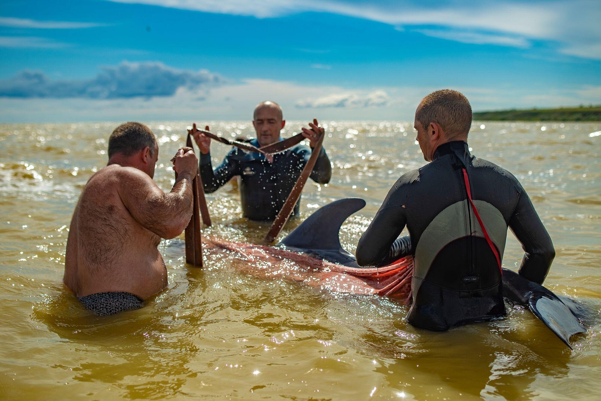 Через полчаса дельфин начал двигать плавниками, открывать глаза и пытаться плыть
