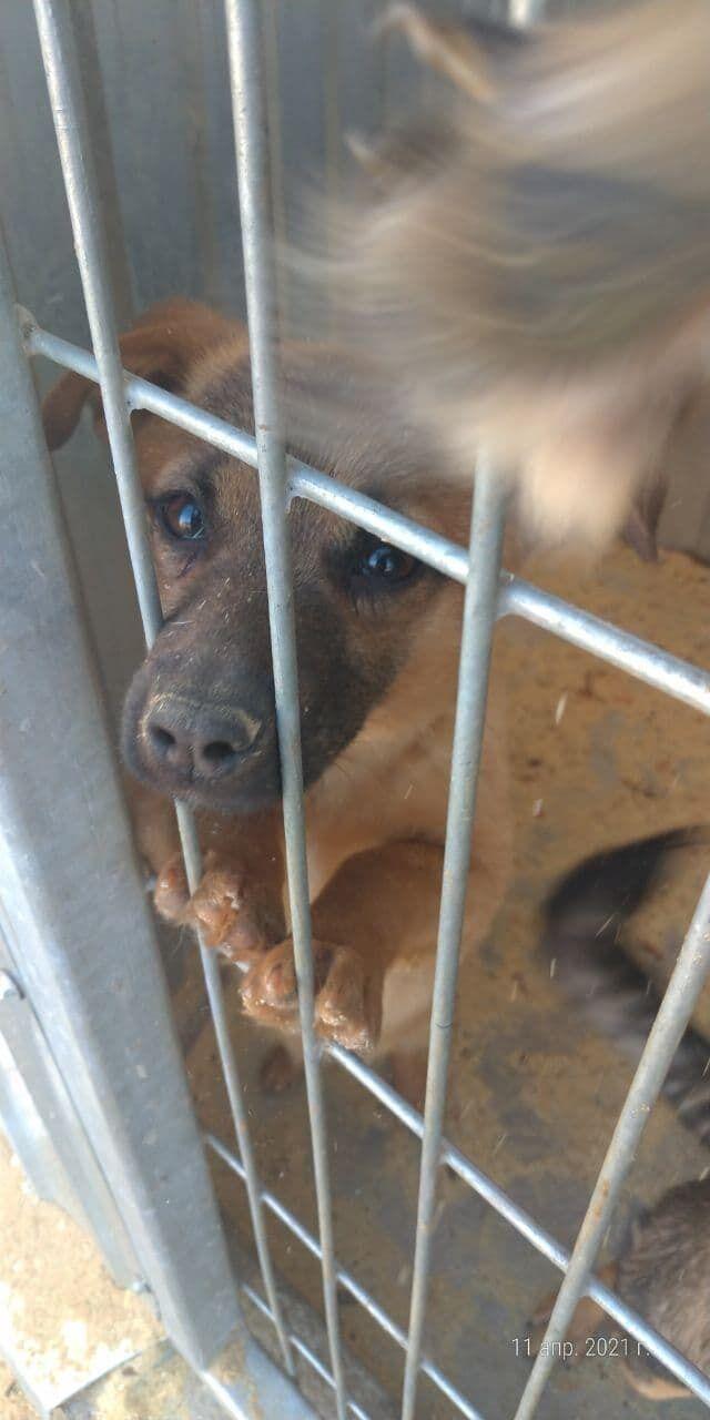 """Притулок """"Сіріус"""" просить про допомогу: 3 тисячі тварин можуть залишитися без корму і догляду"""