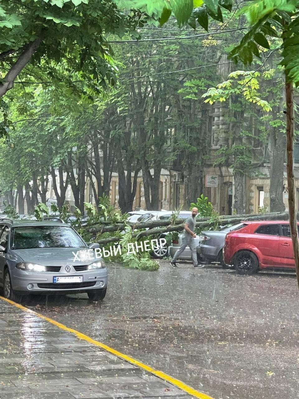 Сломанное дерево упало на дорогу