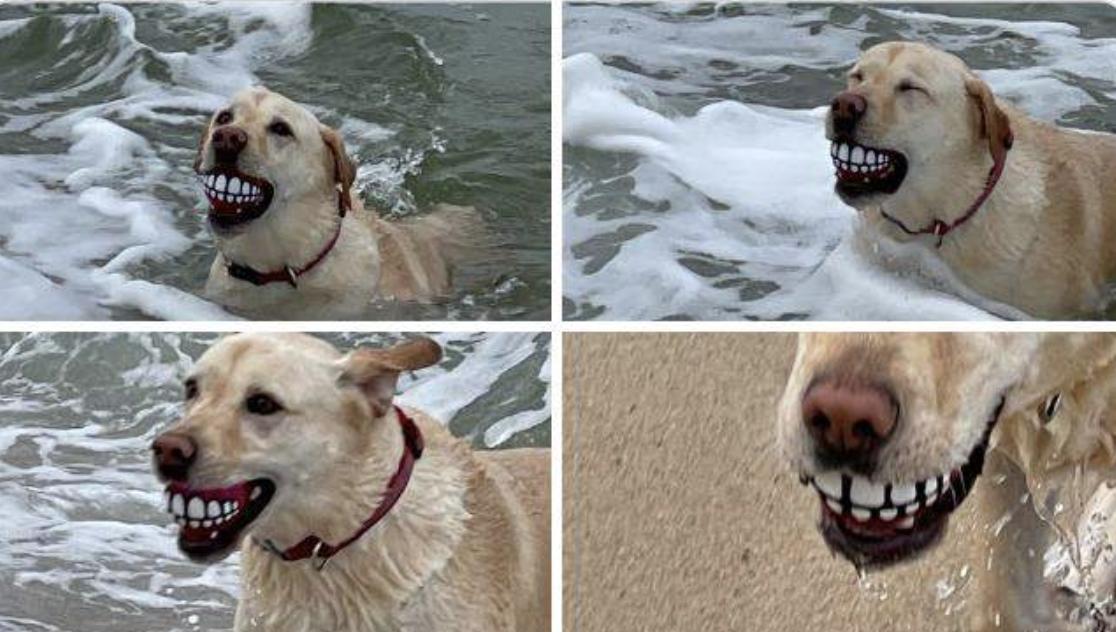 Пес веселить господарів