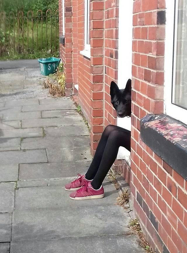 Пес выглядывает из двери.