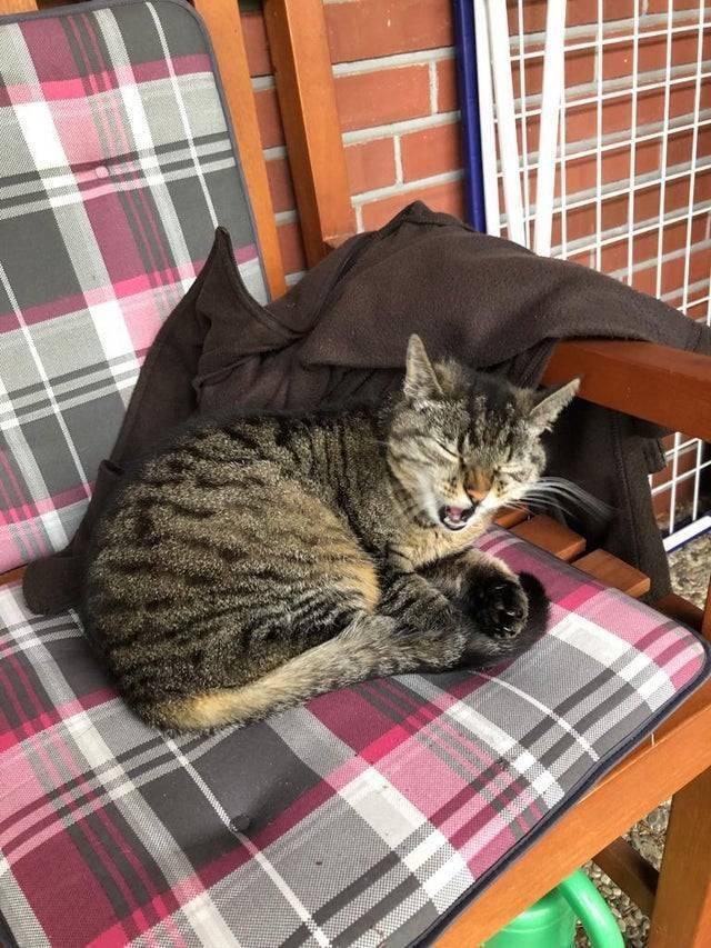 Кіт відпочиває на кріслі