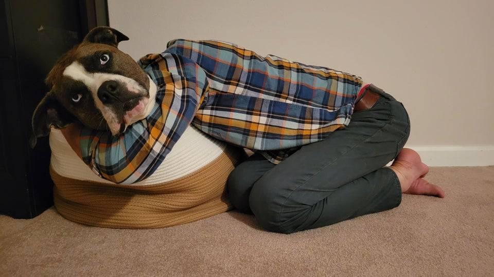 Пес надел рубашку и джинсы.