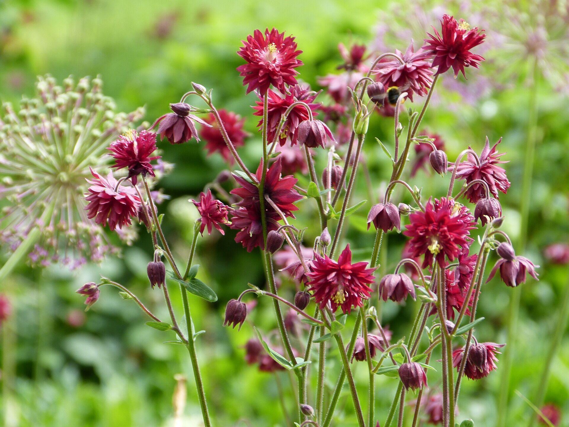 17 июня считается плохой приметой срывать цветы