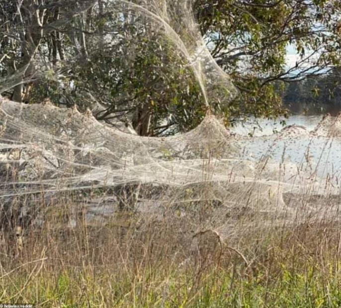 Пауки были вынуждены плести паутину на деревьях и дорожных знаках