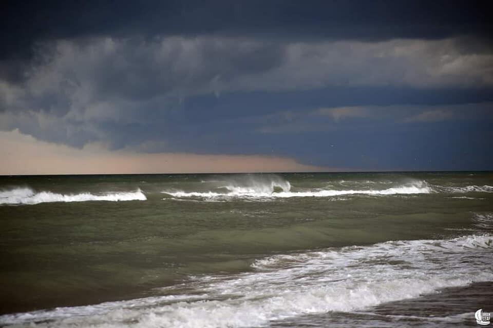 В Одессе море стало зеленого цвета.