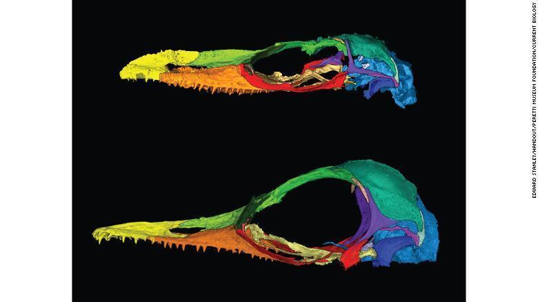 Найденный в янтаре череп принадлежал доисторической ящерице