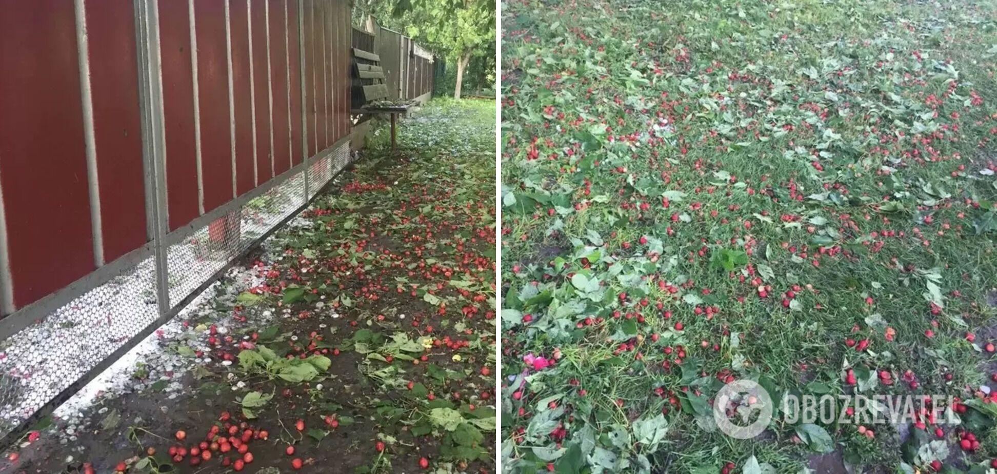 Град уничтожил урожай черешни