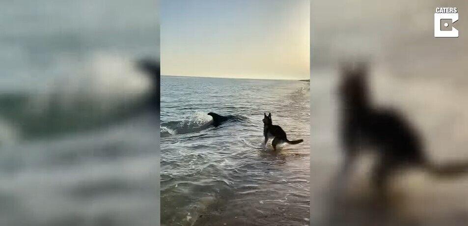 Собака зустрівся з дельфіном.