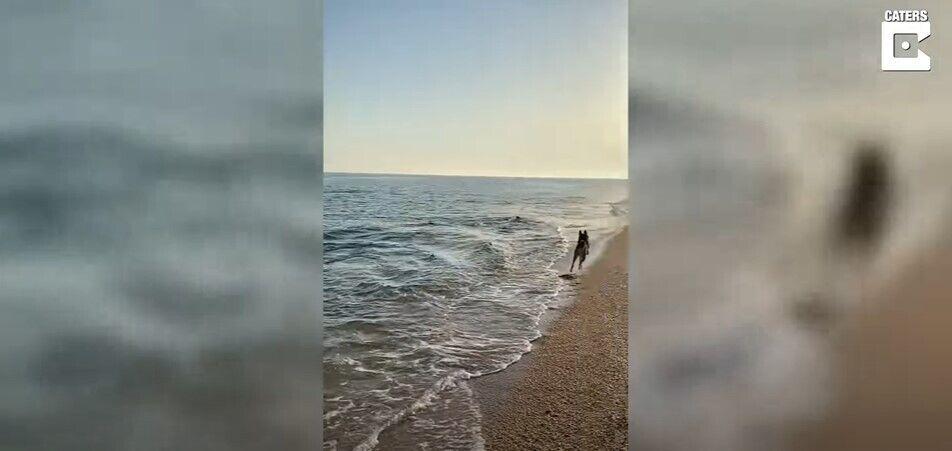 Собака познайомився з дельфіном.