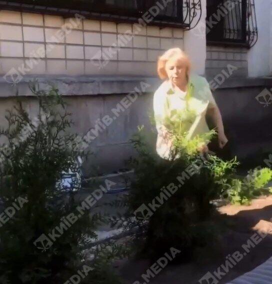 У Києві жінка вирвала з корінням кущі, які висадили співробітники кафе.