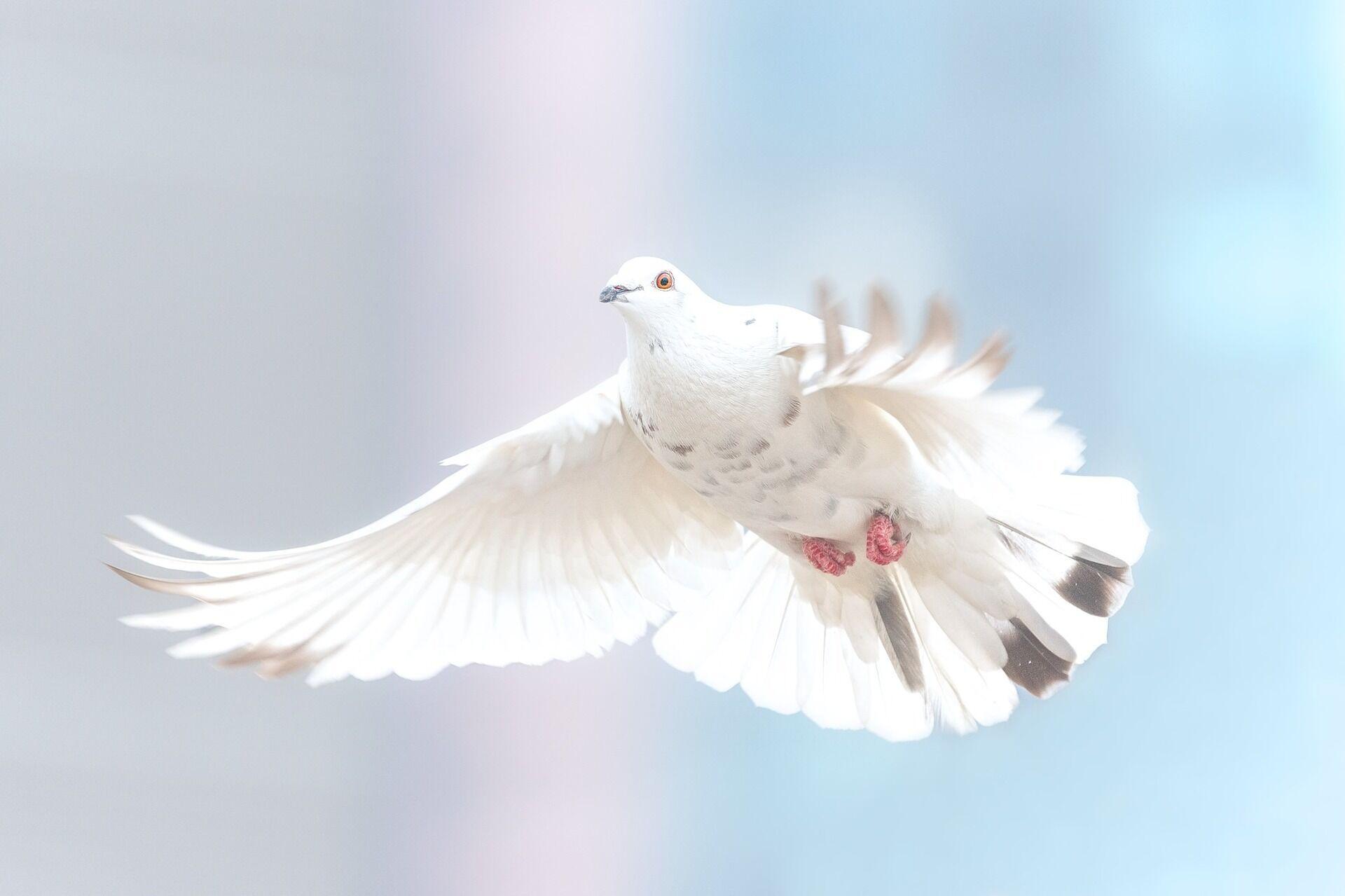 Свято на честь Святого Духа святкується наступного дня після Трійці