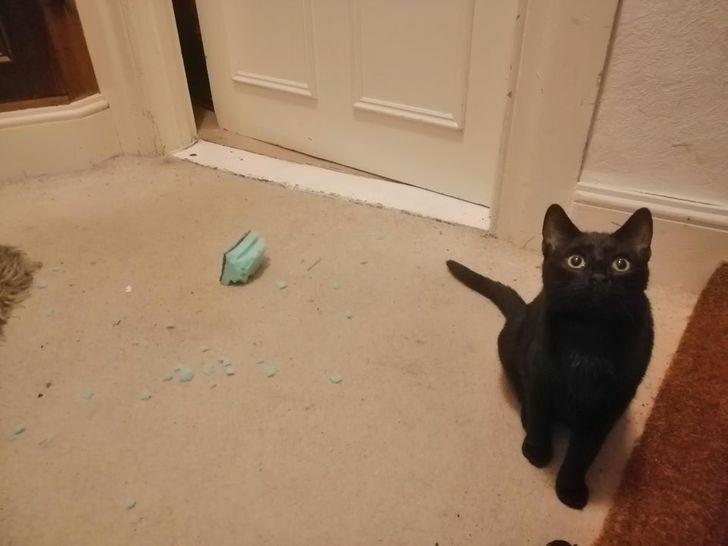 Котик делает вид, что ничего не произошло.