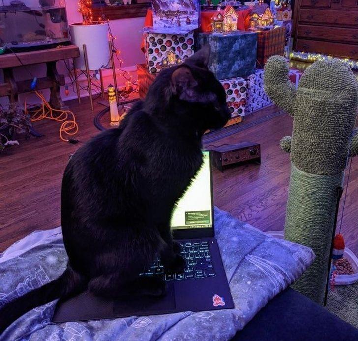 Кот запрещает играть на компьютере.