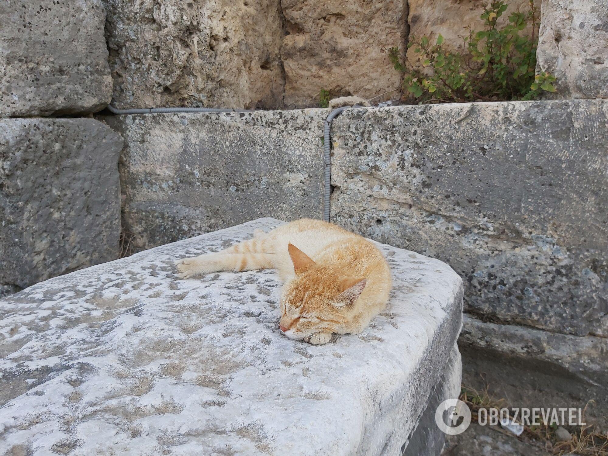 Кот в Перге