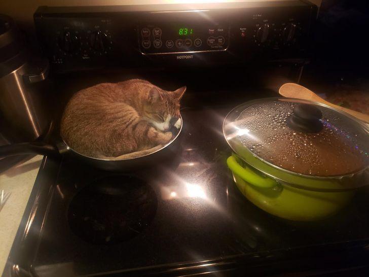 Кот отдыхает в теплой сковородке.