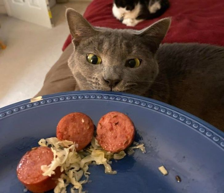 Кот положил глаз на аппетитную сосиску.