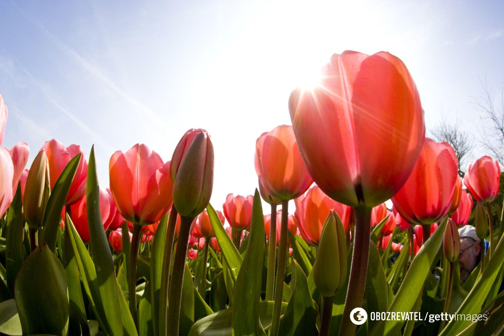 Настоящее лето в Украине начнется 10 июня.
